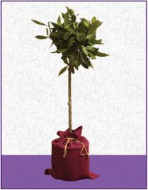 """""""Rooted"""" image"""
